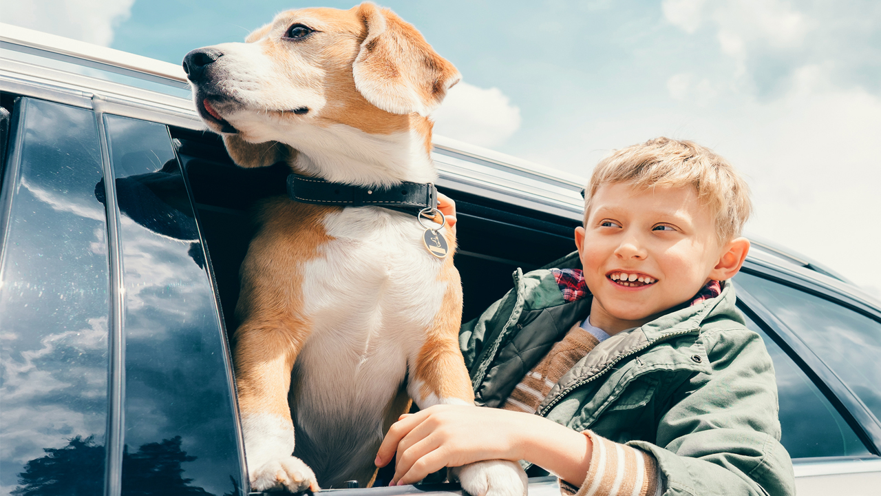 pet tips for summer fun