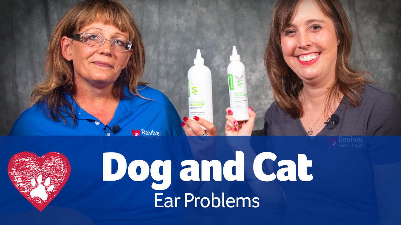 Dog Ear Problems