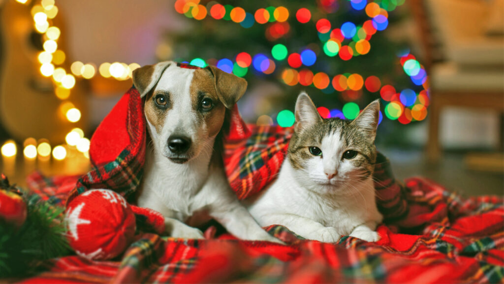 Holiday Pet Tips